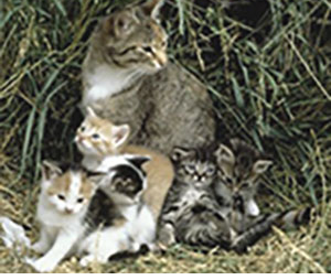 feral mother cat and kittens